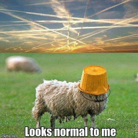 looking_normal