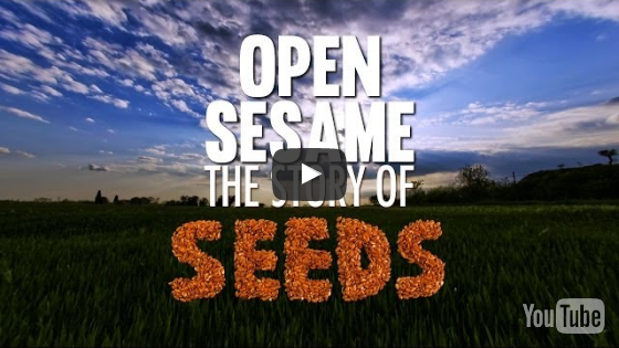 youtube-the-story-of-seeds