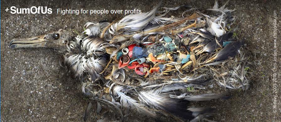 bird_full_of_plastics